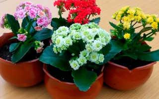Комнатные растения и их благотворное энергетическое влияние