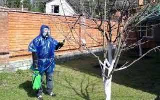 Опрыскать яблони весной от вредителей