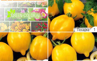 Сорт лимон лиана томаты от фёдора