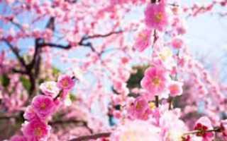 Какие самые красивые розовые цветы