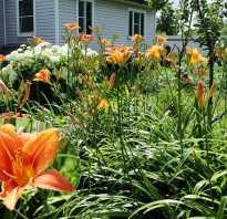 Gardening многолетние растения подкормка