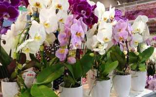 Какие горшки нужны для орхидей