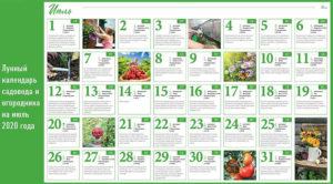 Лунный календарь садовода и огородника на июль 2020 года